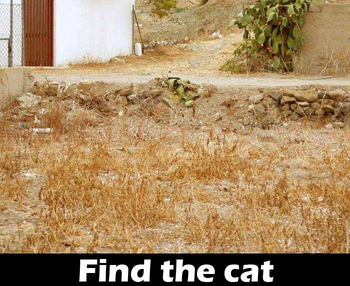 find the cat